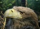 Centar za promatranje ptica